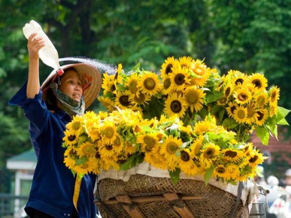 Tháng 7 của hoa hướng dương