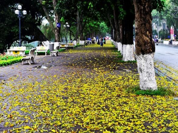 Thu về, lá vàng rụng trải thảm những con đường