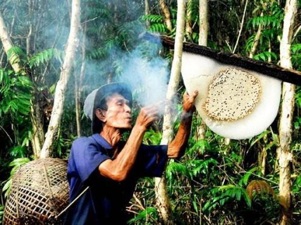 Nghề gác kèo ong ở rừng U Minh Hạ