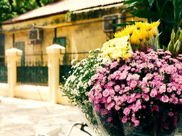 Thu về xao xuyến những sắc hoa