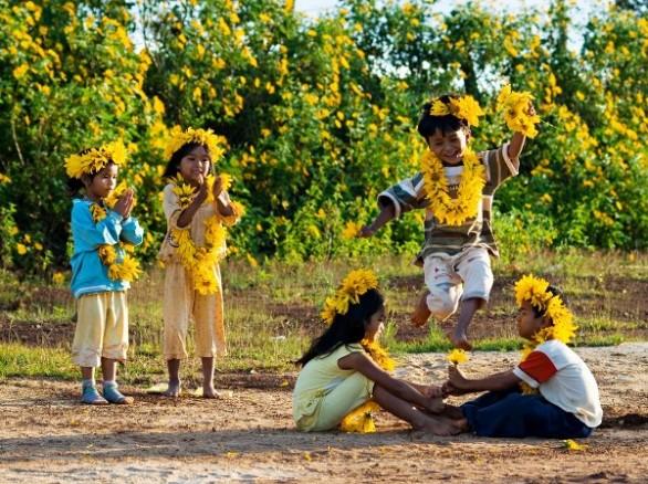 Ngắm hoa dã quỳ khoe sắc ở Ba Vì