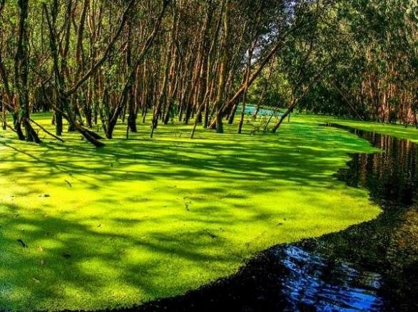 An Giang: Về rừng tràm Trà Sư