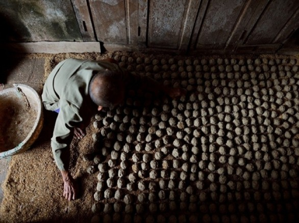 Lên men để nấu rượu ở làng nghề Phú Lễ