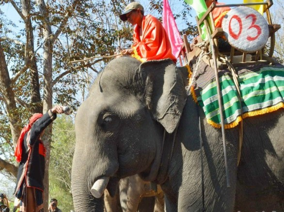 Lễ cúng sức khỏe cho voi ở Tây Nguyên