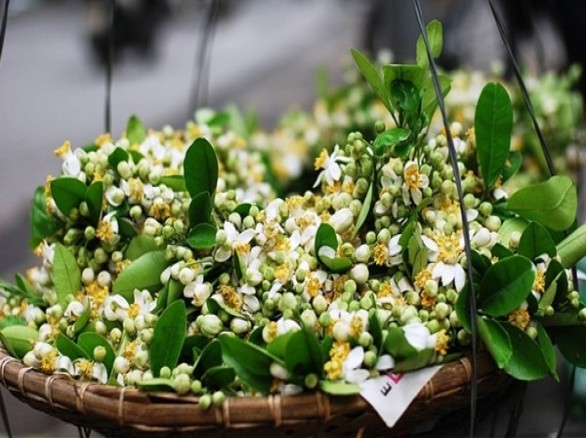 Tháng 3 về thơm hương mùi hoa bưởi