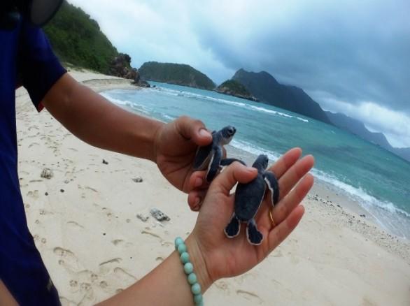 Trải nghiệm thú vị khi du lịch Côn Đảo: Xem rùa đẻ trứng