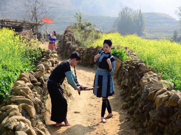 Cánh đồng hoa cải vàng thu hút khách du lịch đến Sapa