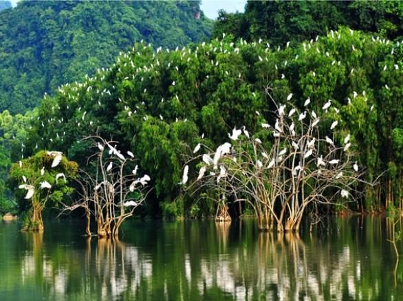 Du lịch sinh thái với Sân chim Vàm Hồ -Bến Tre