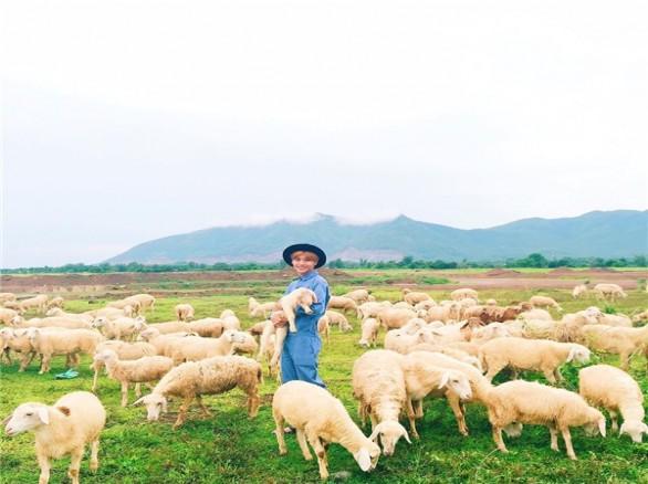Đậm chất du mục ở Đồi cừu Bà Rịa-Vũng Tàu