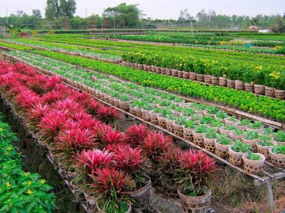 Vườn hoa kiểng Thanh Tâm - Long An