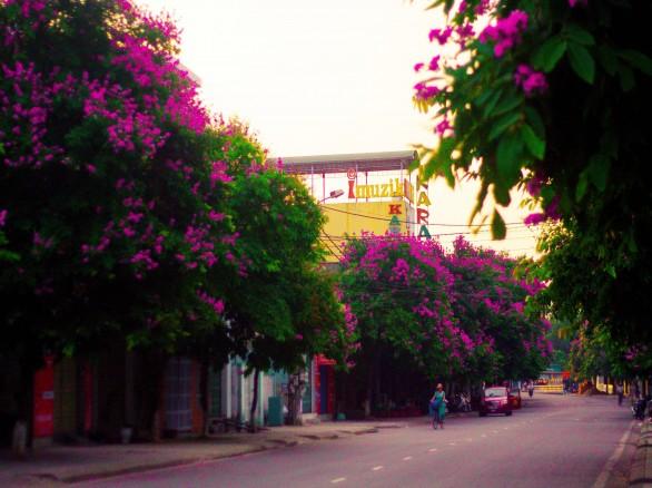 Sắc tím tràn ngập những con đường Hà Nội
