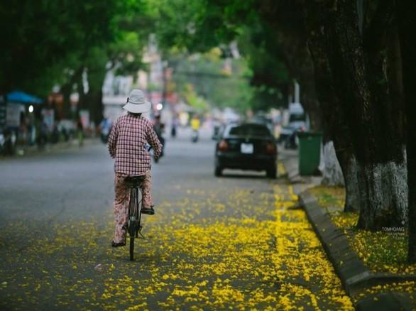 Du lịch Huế ngắm hoa phượng vàng