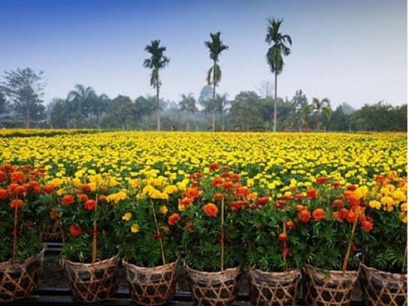 Vườn hoa kiểng Thanh Tâm