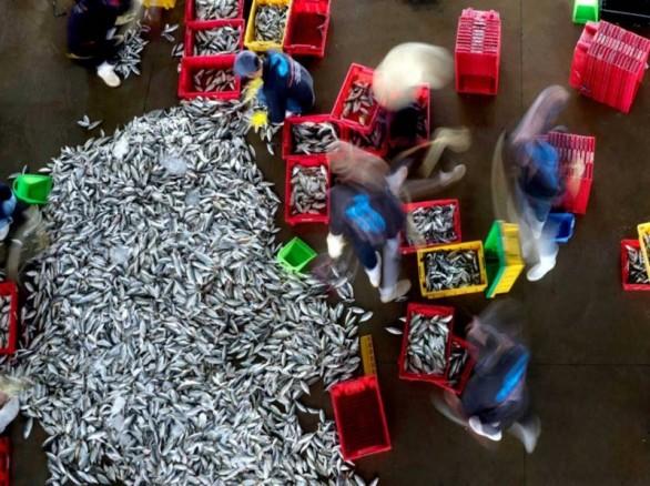 Vũ khúc ngày mùa ở chợ hải sản