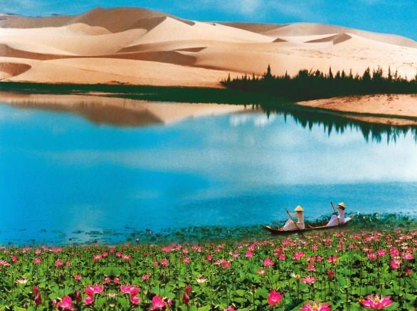 Bàu Trắng - Sen nở giữa sa mạc