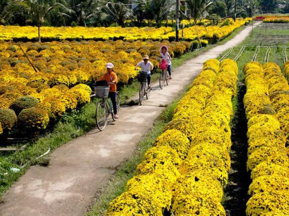 Đẹp ngỡ ngàng làng hoa Mê Linh