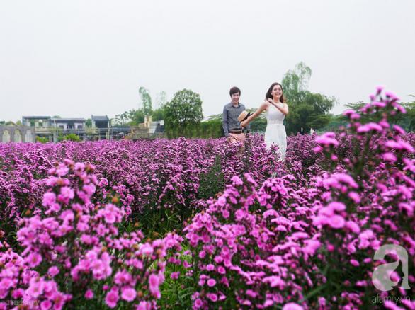 Tím lịm cánh đồng hoa thạch thảo ở Hà Nội
