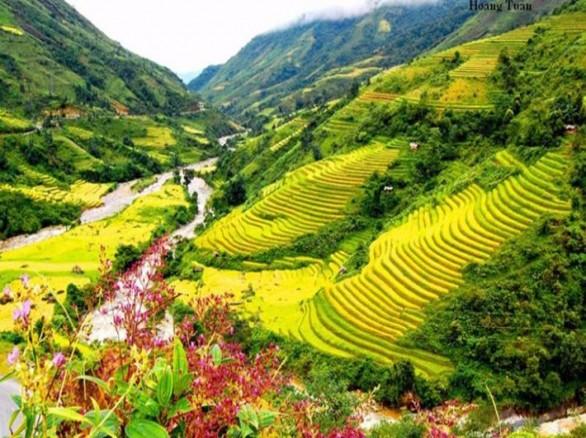 Bát ngát xanh cánh đồng lúa ở thung lũng Mường Lò
