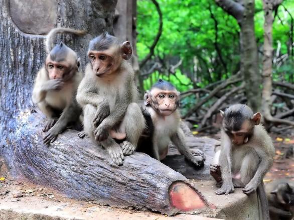 Kỳ thú Đảo Khỉ ở Cần Thơ