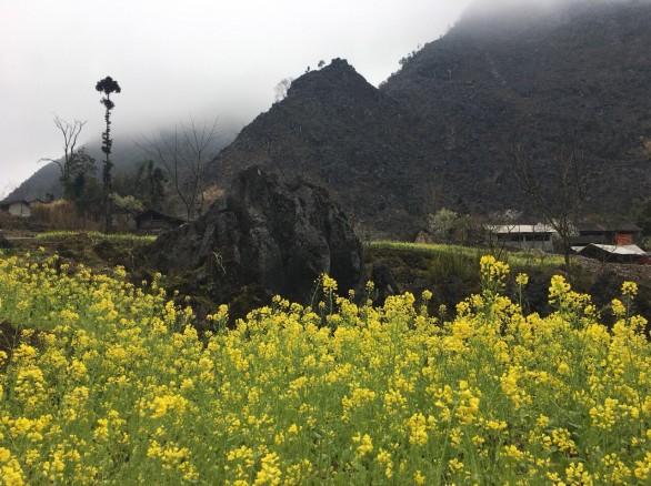 Cánh đồng hoa cải vàng trên cao nguyên đá Đồng Văn