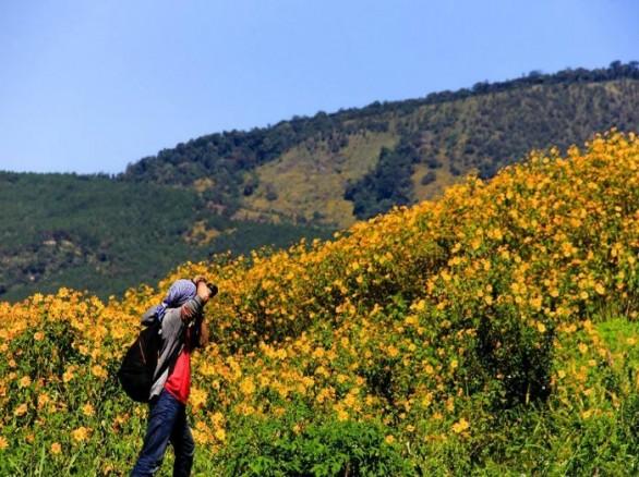 Rực rỡ hoa dã quỳ ở Đà Lạt