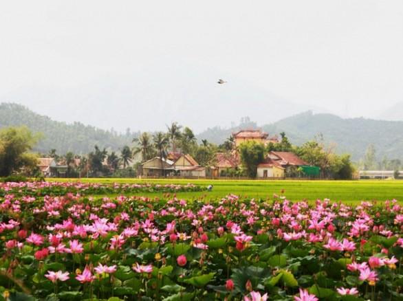 Đẹp ngỡ ngàng cánh đồng sen ở Khánh Hòa
