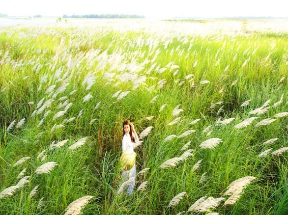 Cánh đồng cỏ lau trắng muốt bên dòng sông Lam