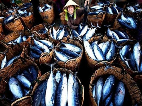 Ghé thăm làng cá Bến Đình