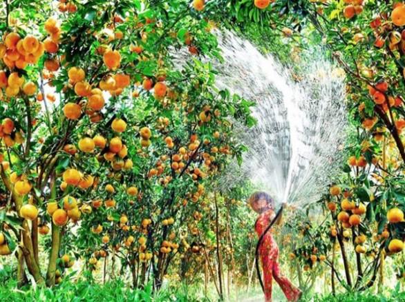 Tháng 7 - Cần Thơ mùa trái cây