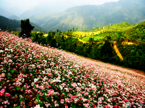 Tháng 11 - Hà Giang: Mùa tam giác mạch