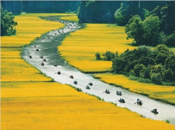 Tháng 5 - Ninh Bình: Mùa lúa chín