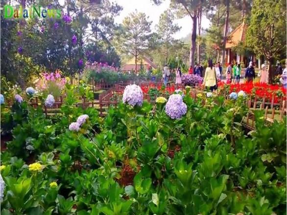 Ngắm vẻ đẹp của vườn hoa Thiền Viện Trúc Lâm