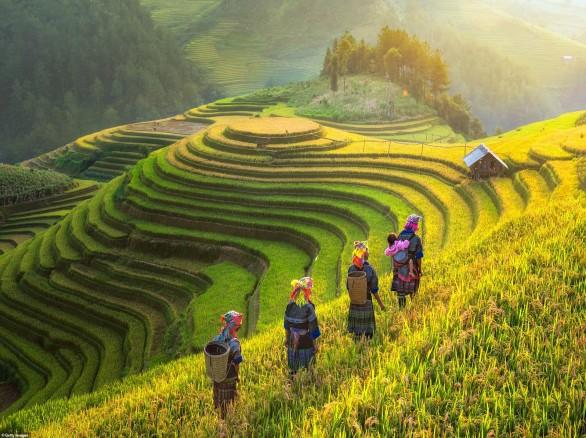 Đi qua những thửa ruộng bậc thang ở huyện Mù Cang Chải