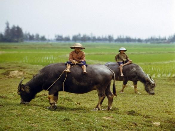 Bình dị nơi đồng quê Việt Nam