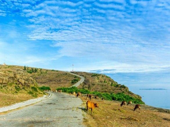 Bình yên trên đảo Lý Sơn