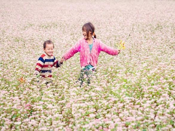 Đẹp ngỡ ngàng mùa hoa tam giác mạch Hà Giang